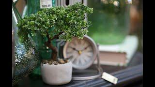 Evergreen's back!