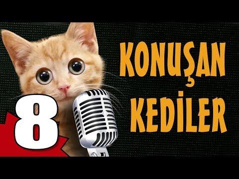 Konuşan Kediler 8 - En Komik Kedi Videoları