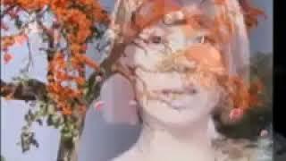 👉 สาวทุ่งดอกจาน - จินตรา - พูนลาภ