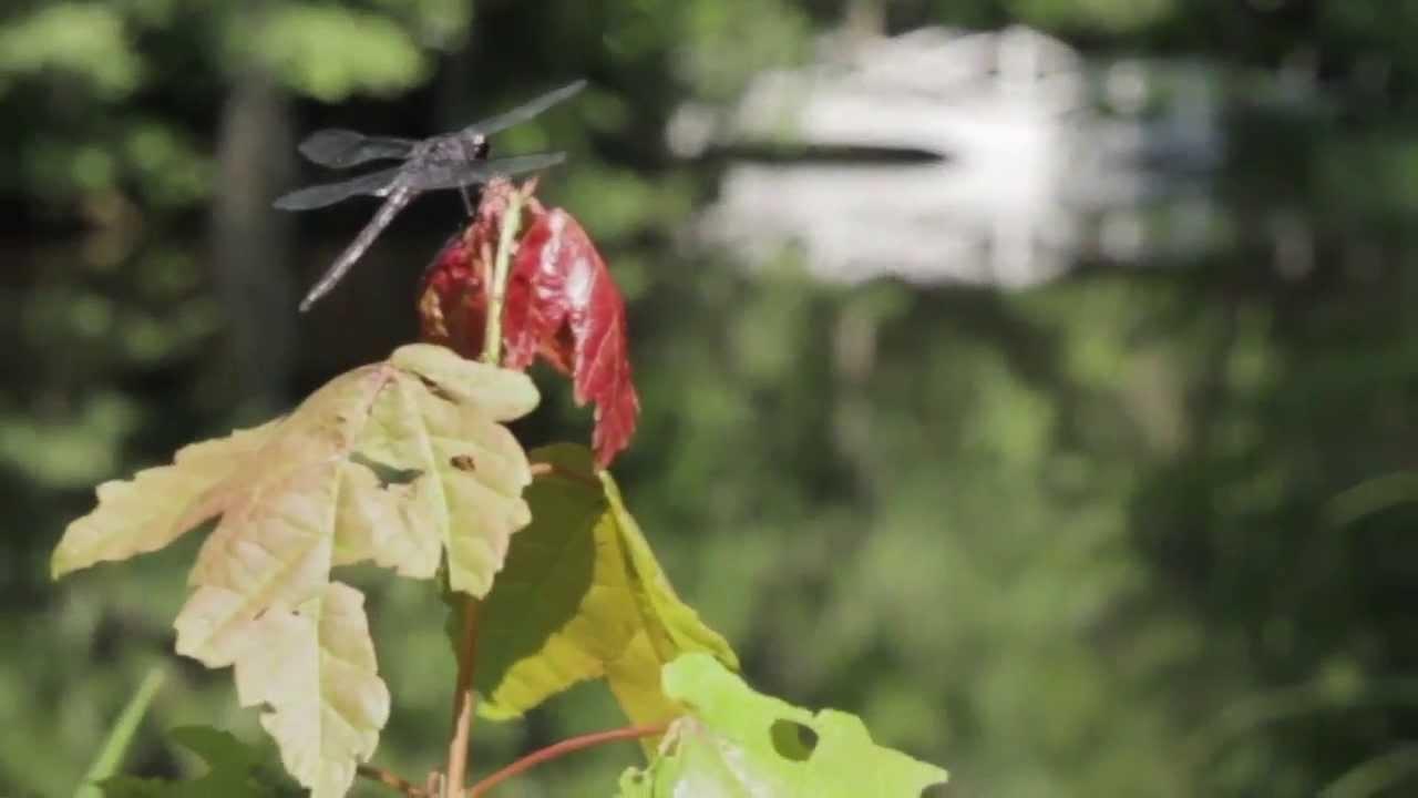 Magnolia Plantation and Gardens historian Lisa Randle ...