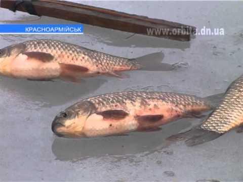 Особенности красноармейской рыбалки в оттепель