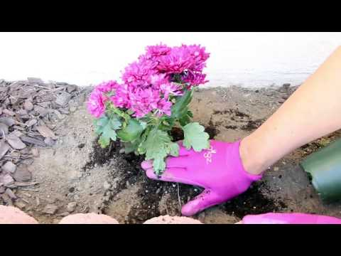 How to Plant Flowers - Spring Garden 2015