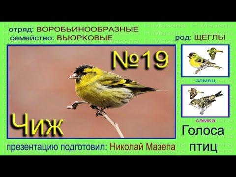 Краткий определитель птиц фото, рисунки, полезные ссылки