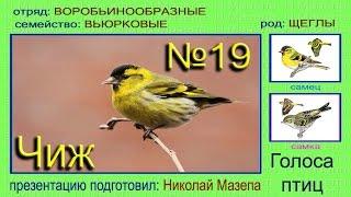 Чиж. Голоса птиц