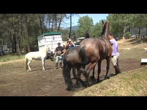 Festa do Cabalo