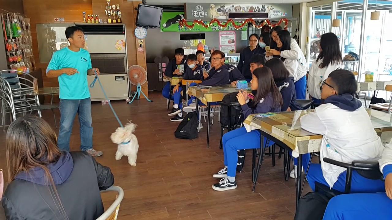 105/11/10 桃園龍潭高中校外教學蒞臨鹿和訓犬學校(基礎教育篇7) 鹿和訓犬 - YouTube
