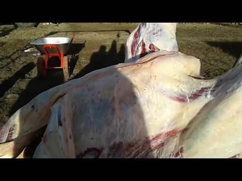 Как разделать быка