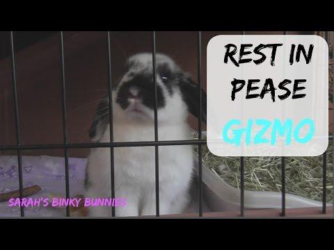 Goodnight Gizmo (read description)