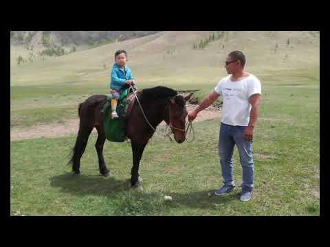 Horse trip Mongolia