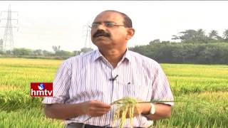 Rice Cultivation Information Detailed Guide By Dr Surendra Raju | Nela Talli | HMTV
