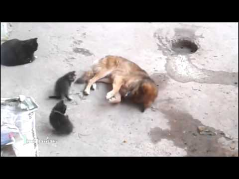Thumbnail: Cat Takes Her Kittens To Meet An Old Friend