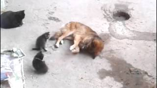 Cat Takes Her Kittens To Meet An Old Friend