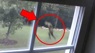 5 Mysterious Creatures Caught on Tape : Top 5 STRANGE Creatures