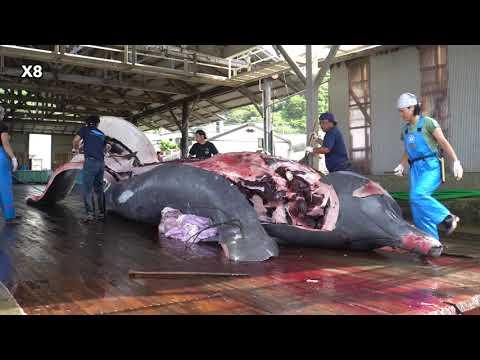 和田漁港 ツチクジラ解体