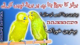 birds ka pair bana hay par pher b breed nahi karta. Video No 67