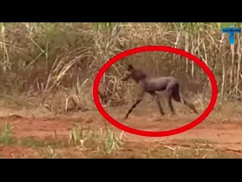 Top 10 Scary & Creepy Things Caught On Camera In The Woods