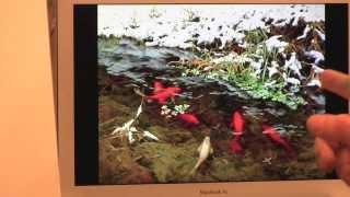 """НОВЫЕ ВИДЕОУРОКИ ИГОРЯ САХАРОВА, урок """"Рыбки кои"""" с замедленными съемками"""