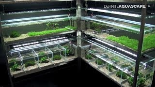Aquarium Ideas from InterZoo 2012 - Ruinemans Aquarium (pt. 13)