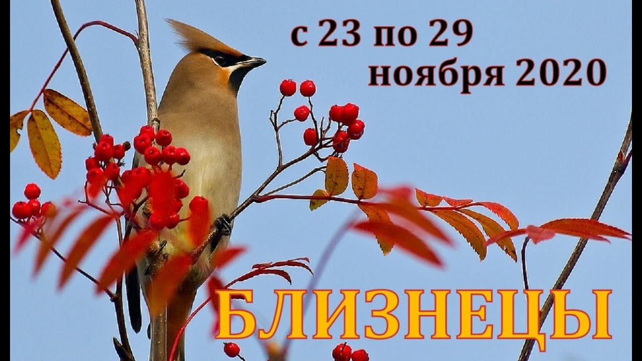 БЛИЗНЕЦЫ С 23 ПО 29 НОЯБРЯ 2020 ТАРО ПРОГНОЗ РАБОТА ДЕНЬГИ ОТНОШЕНИЯ