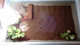 メダカ飼育用水槽に赤玉土を敷いて1日経過!超水が透明になってるwww thumbnail