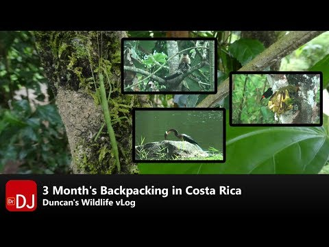 Backpacking Costa Rica for Wildlife | vLog #1 | Nature Travel Guide