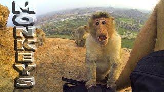 Индия. Хампи. Закат у храма обезьян. Angry ape in Hampi.Hanuman Temple. India