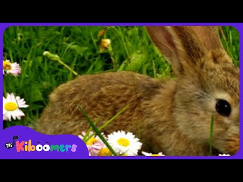 Little Bunny Foo Foo Song for Kids | Bunny Song | Rabbit Song | The Kiboomers