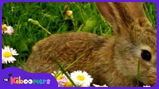 Little Bunny Foo Foo   Animal Songs For Preschool
