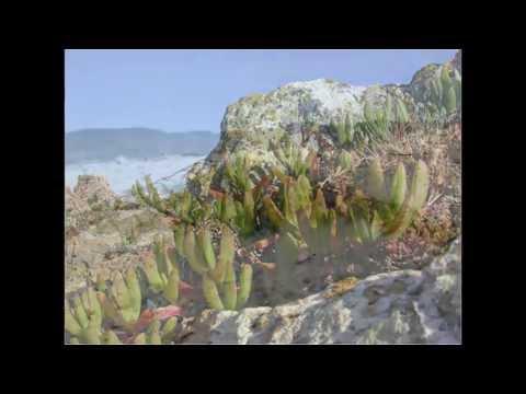 Aboriginal heritage on the west coast of Tasmania