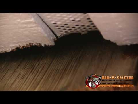 Roof Rat Entry Gap at a Rat Removal Job in Atlanta