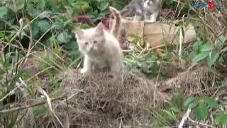 На улицах Курска умирают от холода выброшенные котята