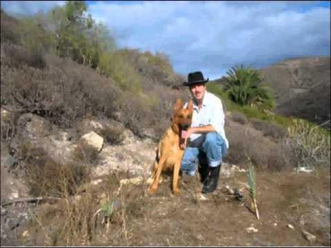guarderia residencia canina en las palmas de gran canaria