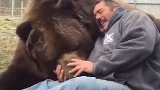 Самый большой медведь в мире который обнимает и целует