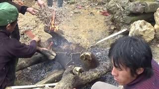 DTVN - gặp trâu chết rét và mèo rừng trên đường đi Si Ma Cai - Lào Cai