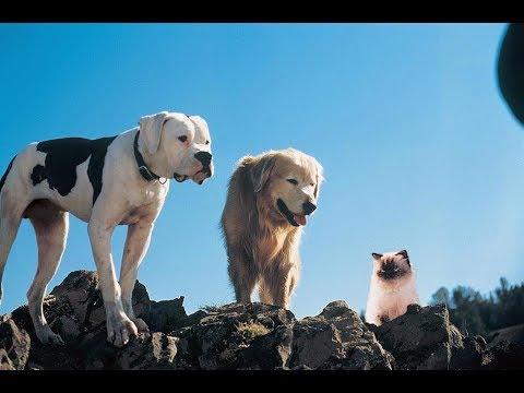Homeward Bound The Incredible Journey (1993) Movie