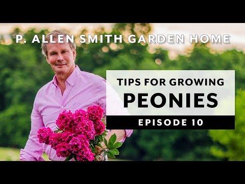 Peonies | Growing Tips & FAQ: Garden Home VLOG (2019) 4K