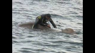 Navy pitches in to rescue elephant at sea