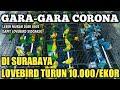 Di Mana Mana Anjlok Harga Lovebird Di Surabaya Mengenaskan  Mp3 - Mp4 Download