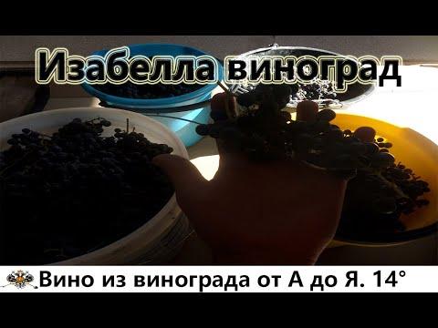 Вино из винограда изабелла от А до Я. 14 градусов