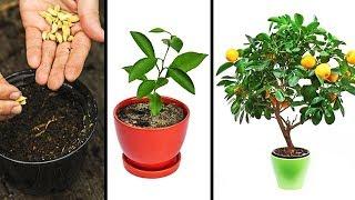 ご自宅で簡単に栽培できる15の植物
