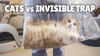 Cats vs Invisible Trap