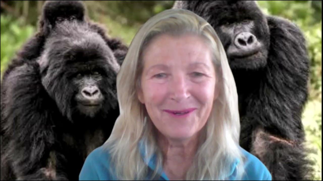 Monumental Mountain Gorillas: From Father to Son