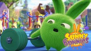 Sunny Bunnies | EXERCÍCIO DE GINÁSTICA | Desenhos animados | WildBrain em Português