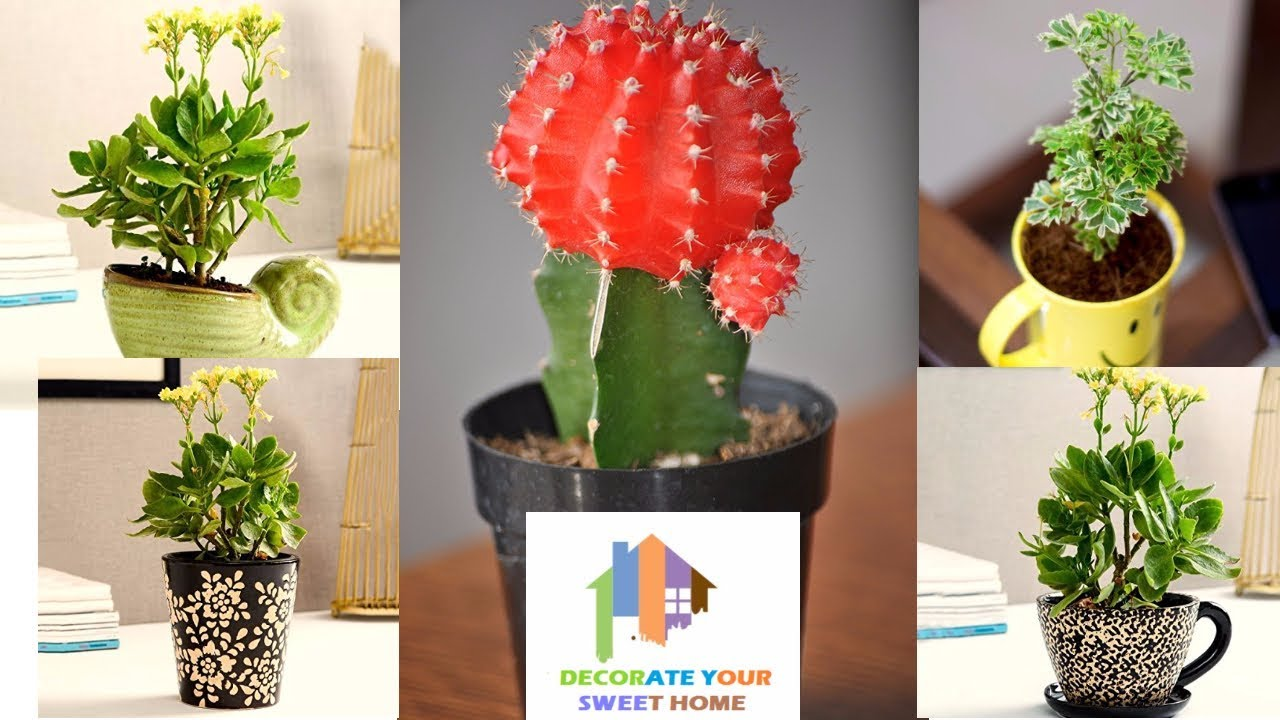 You Should Experience Artificial Plants For Your Home Decoration At Least  Once In Your Lifetime