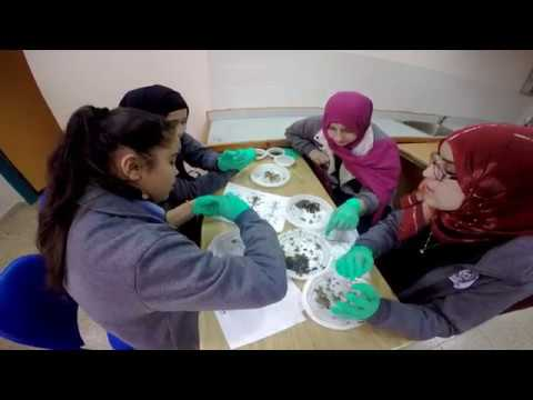 Girls using csi approach to study barn owls in stem study in israel girls using csi approach to study barn owls in stem study in israel and the us ccuart Image collections