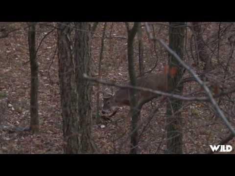 Hunting Whitetail Deer In Missouri