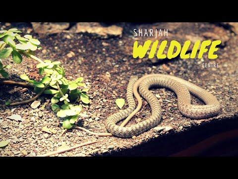 Sharjah Wildlife Centre  Vlog