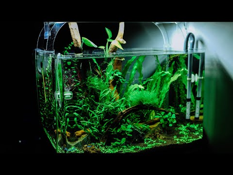 aquarium paffrathschale selber bauen doovi. Black Bedroom Furniture Sets. Home Design Ideas