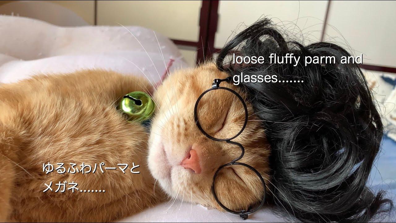 ゆるふわパーマと メガネ.......   loose fluffy perm and glasses.......