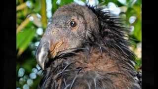 شاهد 11 حيوان سيتعرض للانقراض لكونه قبيح   11 Animals We May Allow To Go Extinct Because They'r